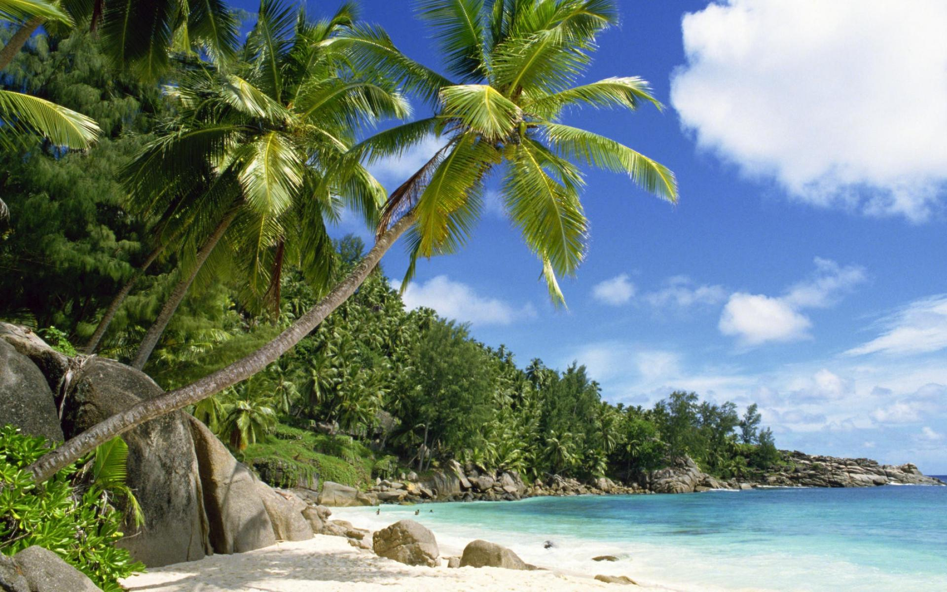 Beaches with Coconut Trees