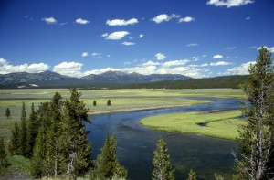 Yellowstone_River_in_Hayden_Valley