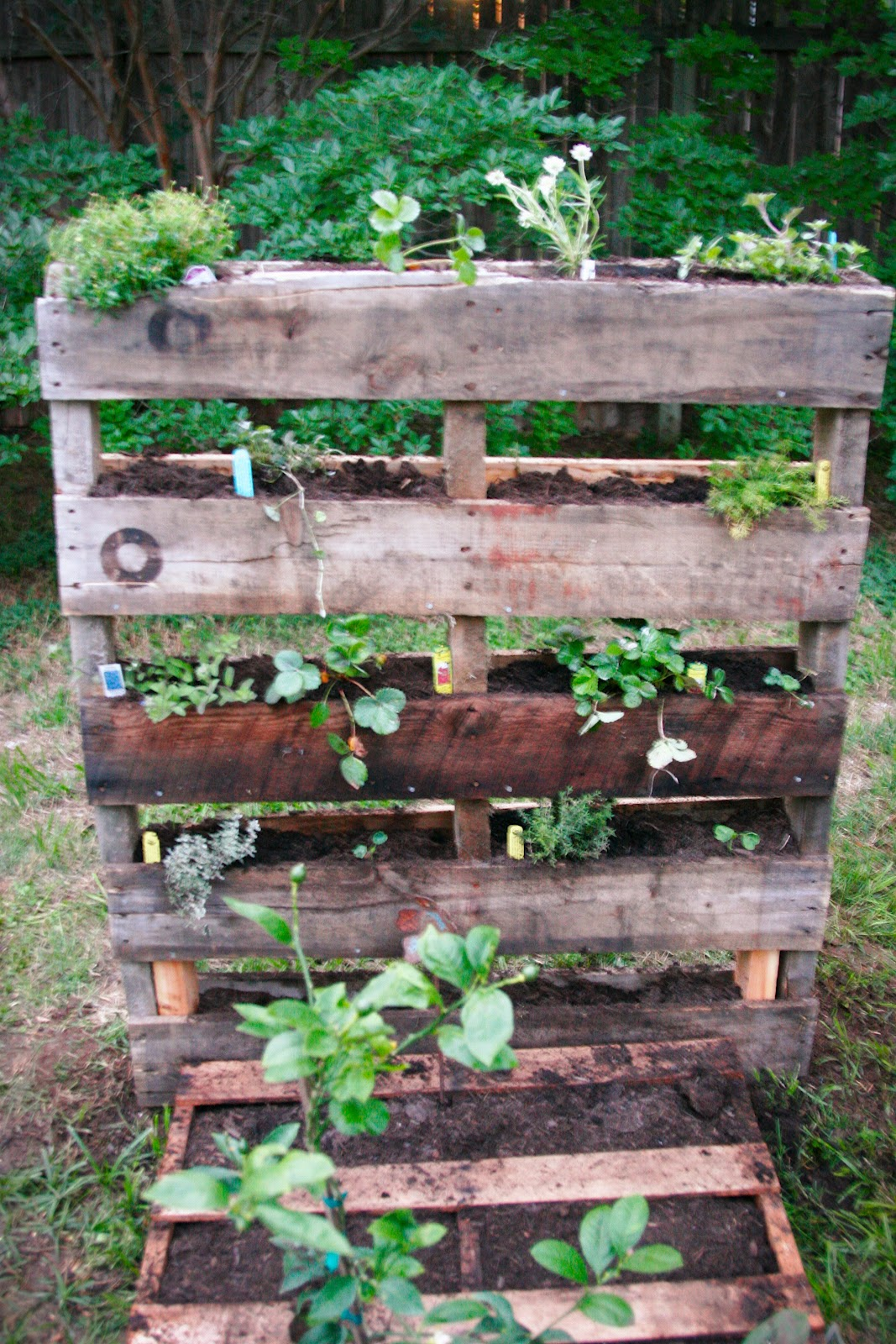 Pallet gardening for Gardening using pallets