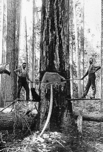 409px-Two_men_chopping_down_a_large_tree_BC_1895