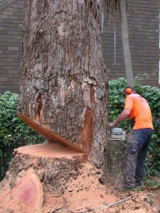 Tree-Cutting-Central-Coast