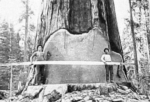 logging_pacific_nw_2
