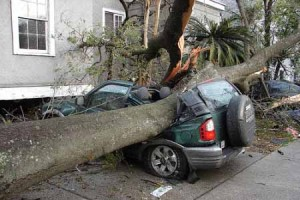 tree-smashes-car