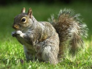 3418364200_005SquirrelDM_468x348_xlarge